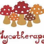 HOW TO SELECT A MEDICAL MUSHROOM PRODUCT THAT WORKS