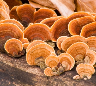 Important Medical Mushrooms for your Pet's Health and Wellness